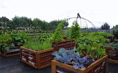 Can Do with Su – Raised Garden Bed Instructions