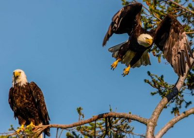 eagles-mike-monnin---untitled-1470