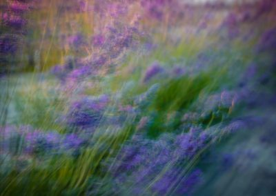 gallery-nature-mike-monnin---untitled-1663